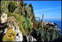 Monaco Expo Cactus