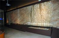 Le Musée d'anthropologie préhistorique